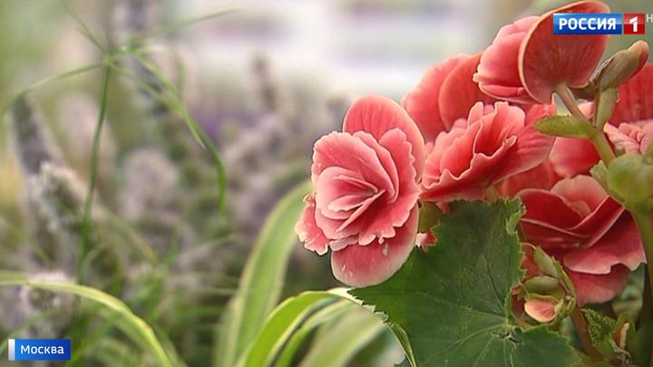 Фестиваль цветов превратил ВДНХ в райский сад