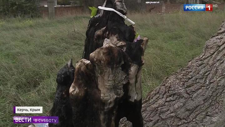 Массовое убийство в Керчи: Росляков превратил в полигон окрестности своего дома