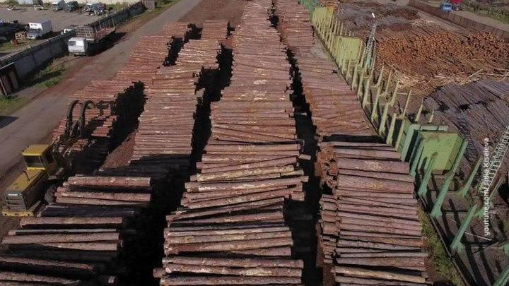Если надо - закроем границы: в Минприроды рассказали, как будут спасать леса