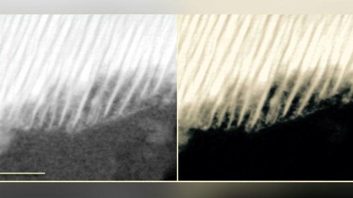 Микрофотография органического вкрапления в метеорите, полученная с помощью просвечивающего электронного микроскопа. Масштаб √ 50 нанометров.