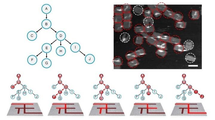 Лабиринт по структуре эквивалентен десятивершинному корневому дереву. Вершина А обозначает вход. Красным цветом обозначены возможное маршруты, но лишь один (справа) является верным.