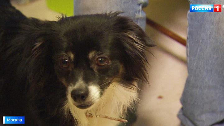 В Москве мужчина на глазах подростка зверски убил его собаку