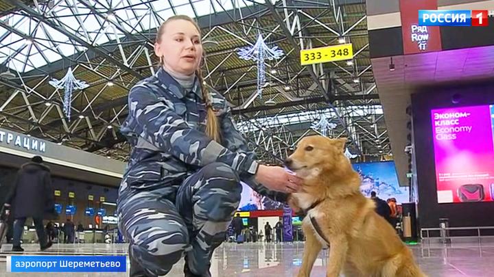 Собаки с уникальным чутьем: шалайку представили как новую породу
