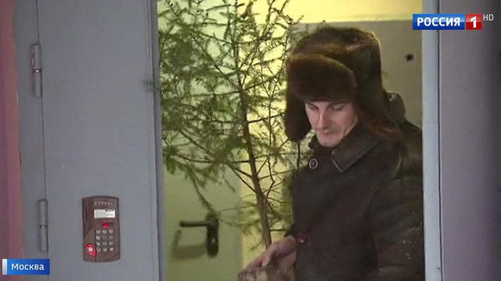 Елочный круговорот: в Москве стартует сбор новогодних деревьев