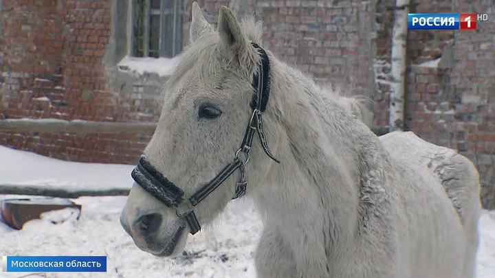 Приют, спасший десятки лошадей, просит о помощи