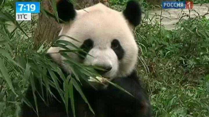 В зоопарк Сингапура прибыли дорогие гости