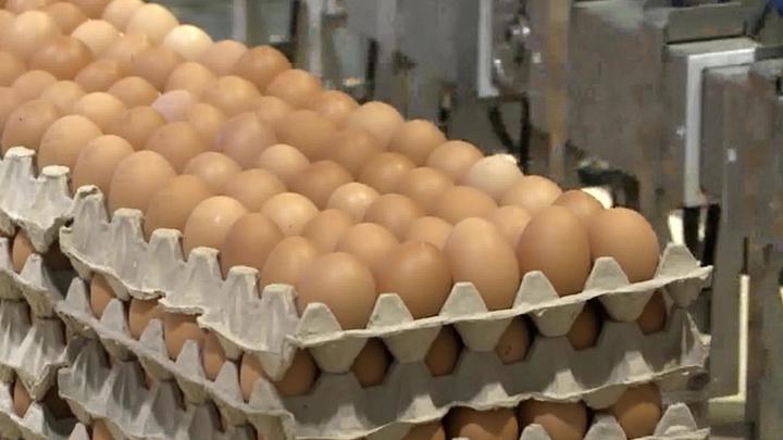 """""""Роковые яйца"""". Специальный репортаж Юлии Макаровой"""