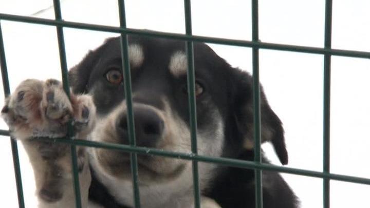 Собачья работа. Специальный репортаж Саши Бублик