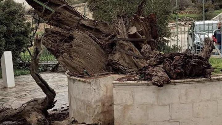 "Апокалипсис близко? В Палестине рухнул ""дуб Авраама"""