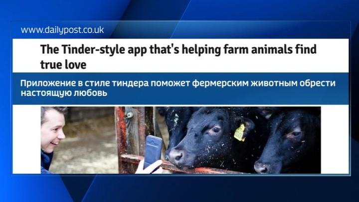 В День влюбленных в Великобритании запустят сайт знакомств для домашнего скота