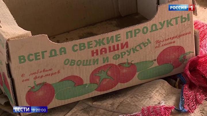 На подпольной ферме в Волгоградской области выращивали овощи-мутанты