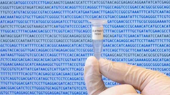 Учёные получили первый геном живого организма, сгенерированный компьютером.