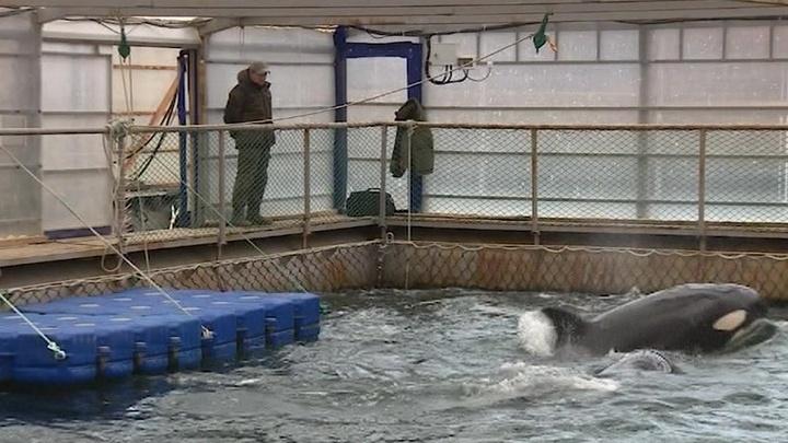 """В Приморье проходит консиллиум о расселении заключенных """"китовой тюрьмы"""""""