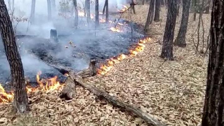 В Магаданской области горят свыше 4 000 гектаров леса