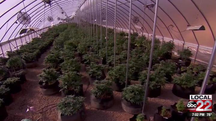 Бывший генеральный директор НТВ открывает в США аптечные пункты с продажей марихуаны