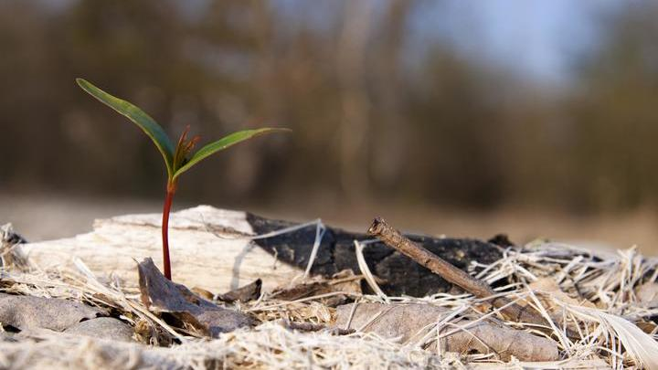 Специалисты вышли на след патогенов, которые могут мешать росту саженцев рядом с родительским деревом.