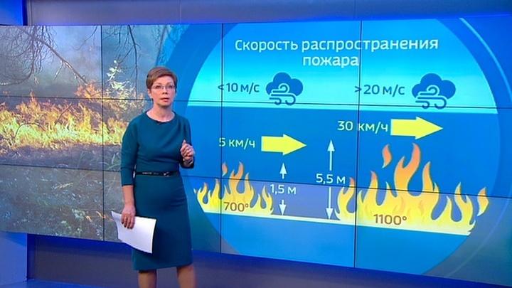 """""""Погода 24"""": Дальний Восток РФ и Забайкалье страдают от природных пожаров"""