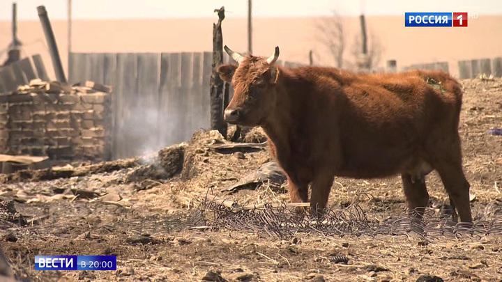 ЧП огромного масштаба: 27 очагов природных пожаров пылают по России