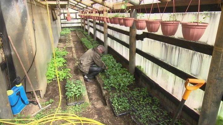 Сенаторы попросили Минсельхоз предоставить цветоводам право на льготные кредиты
