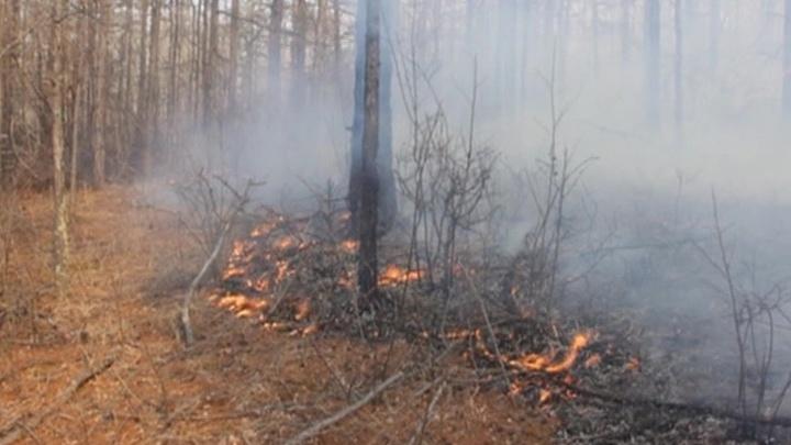 В России продолжают гореть тысячи гектаров