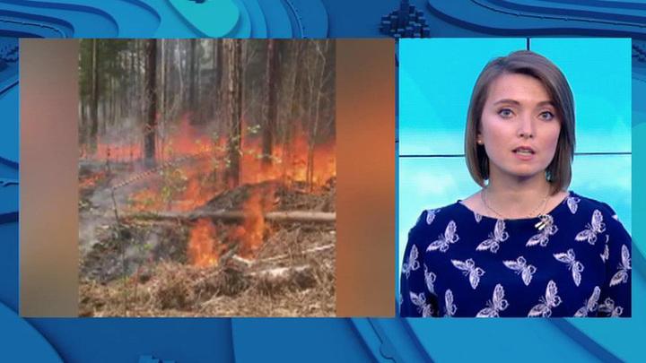 """""""Погода 24"""": в России площадь природных пожаров превышает 40 тысяч гектаров"""