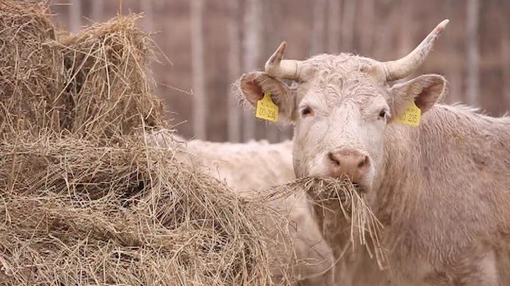 Натуральное хозяйство. Специальный репортаж Юлии Макаровой