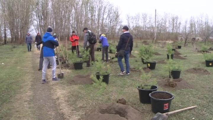 Во Владивостоке сажают кедровый лес на высоте 200 метров над уровнем моря