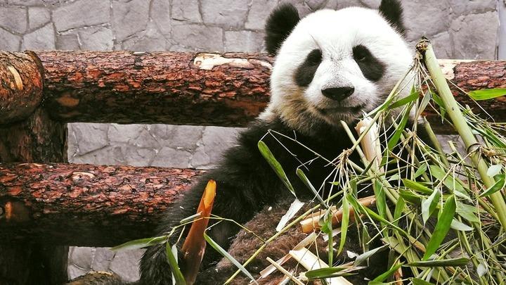 Московский зоопарк увеличивает время работы на три с половиной часа