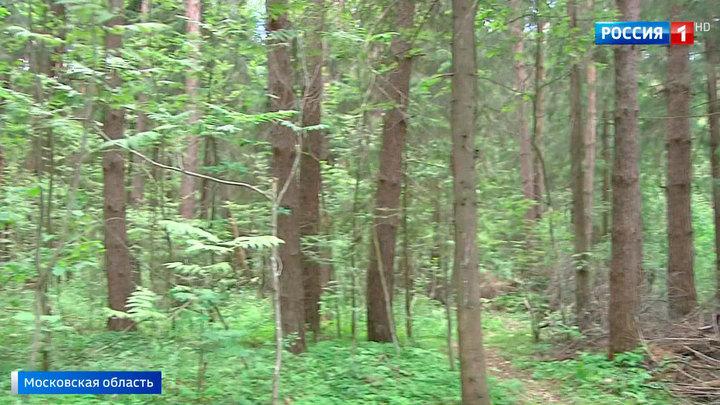 Подмосковные леса ждет масштабная генеральная уборка