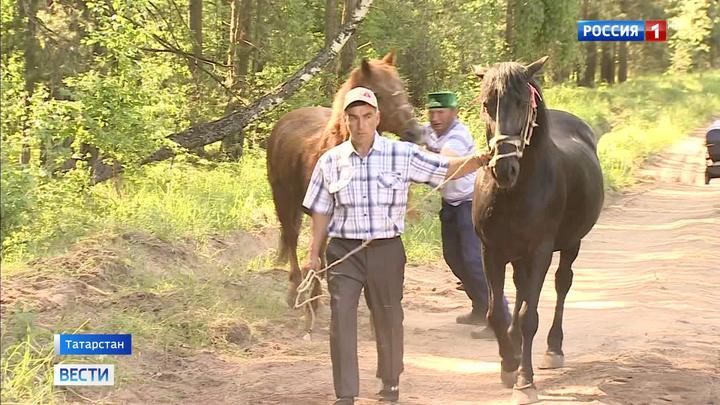 В Татарстане и Башкирии отмечают национальный праздник Сабантуй