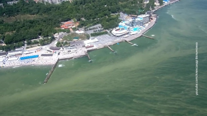 Черное море у берегов Одессы позеленело