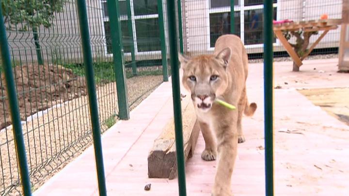 По законам джунглей: обитатели Рублевки вынуждены противостоять хищнику