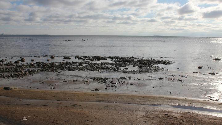 Глядя из Куоккалы. На горизонте Финского залива: слева – Сестрорецк, прямо – Кронштадт. /Фото Леонида Варебруса/