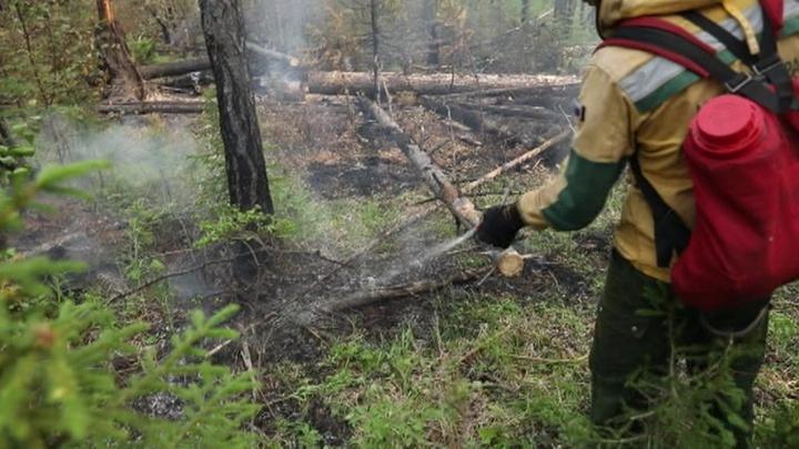 Лесные пожары не утихают