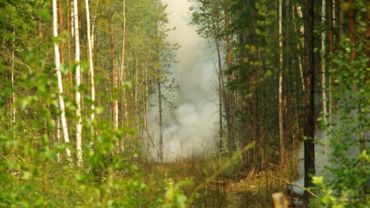 Площадь лесных пожаров в Иркутской области составляет порядка 36 тысяч гектаров