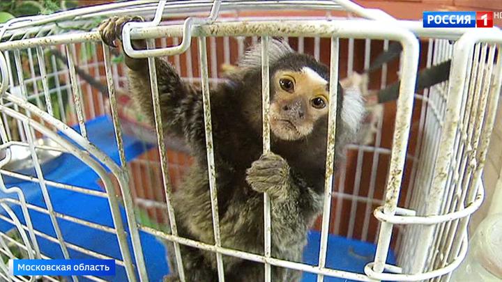 В тесноте и без еды: частные зоопарки не спешат выполнять закон о защите животных