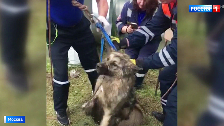 Спасенный из люка в столичной промзоне пес сбежал, как только освободился от строп