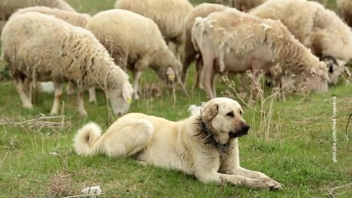 Осторожно, злая собака: правительство РФ утвердило список опасных пород