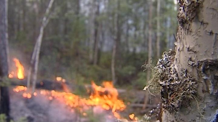 В Красноярском крае с лесными пожарами борются с воздуха