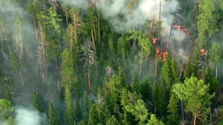 На помощь пожарным пришла авиация: как тушат лесные пожары с воздуха