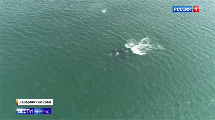 Проявляют активность и держатся вместе: выпущенные в море косатки привыкают к свободе