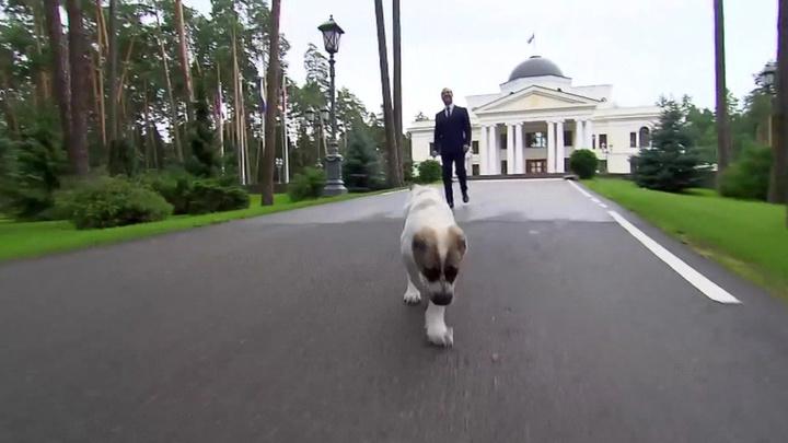 Медведев показал, как алабай Айк обживается в его резиденции