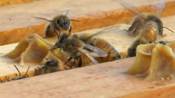 Эксперты: нынешний урожай меда опасен для здоровья