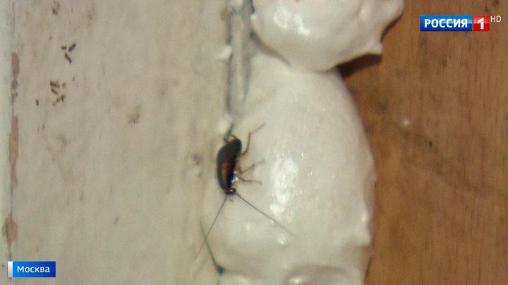 Химикаты не помогают: московскую многоэтажку атаковали полчища тараканов
