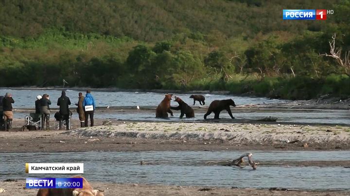 Семь десятков медведей вышли на туристическую тропу