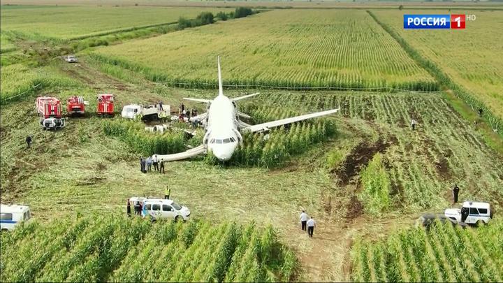 Чудо на кукурузном поле: 93 секунды после столкновения самолета со стаей чаек