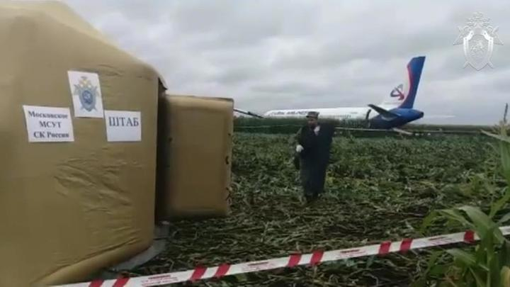 Следком опроверг новости о мародерах на месте аварийной посадки Airbus