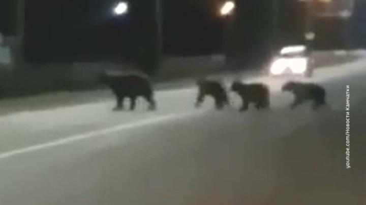 Семья медведей повадилась гулять по камчатскому городу Елизово