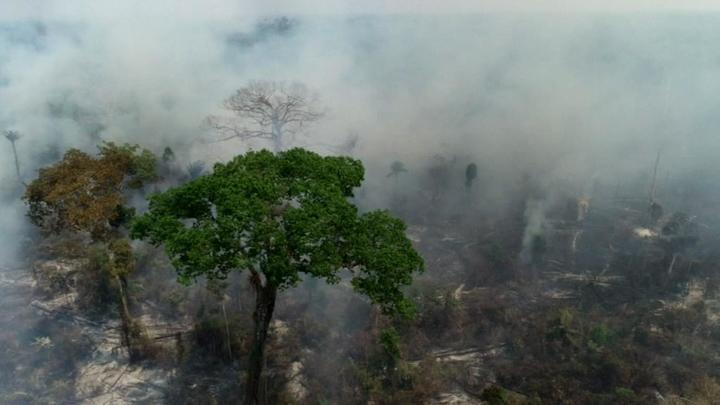 На борьбу с лесными пожарами в Амазонии брошены военные