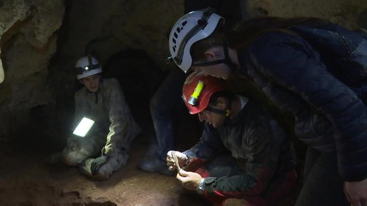 В Крыму обнаружили пещеру с новым видом микроорганизмов и костями древних животных